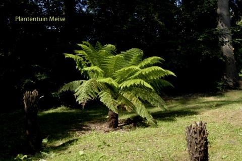Plantentuin Meise (B)